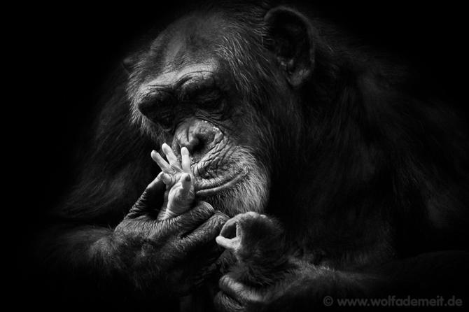 黑白动物世界